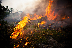 Slash and burn agriculture in Yen Bai Province, Vietnam, Southeast Asia.
