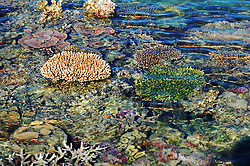 A coral garden on Turtle Reef in Talbot Bay on the Kimberley coast of Western Australia.  The Kimberley has the greatest diversity of coral species of any area in Western Australia.