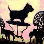 Scottie dog shadow