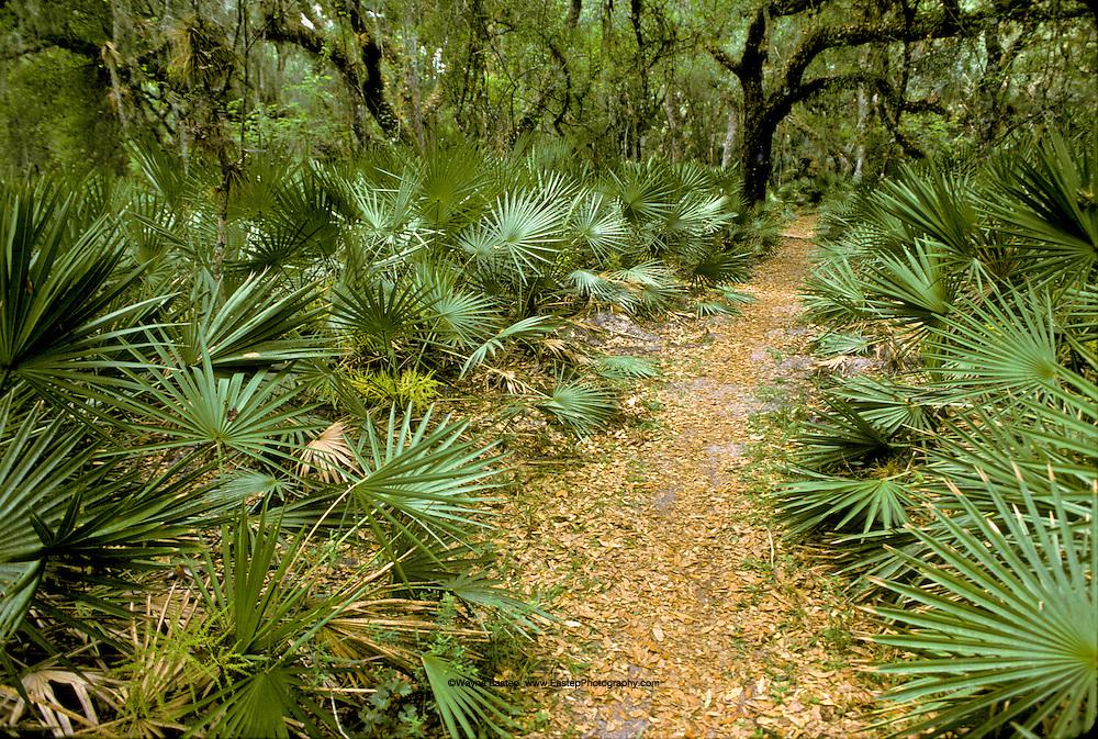 Myakka State Park, Florida