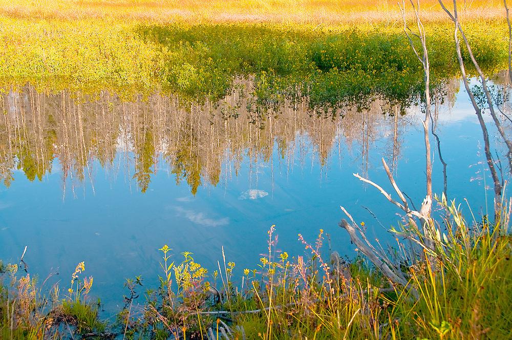 Nature's art along Wilson Road, Grand Tetons National Park, Wyoming.