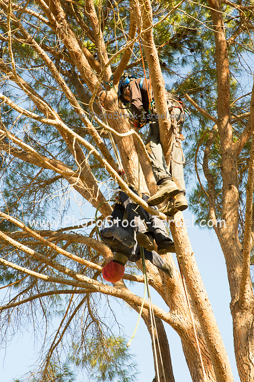 Cutting down a large garden tree