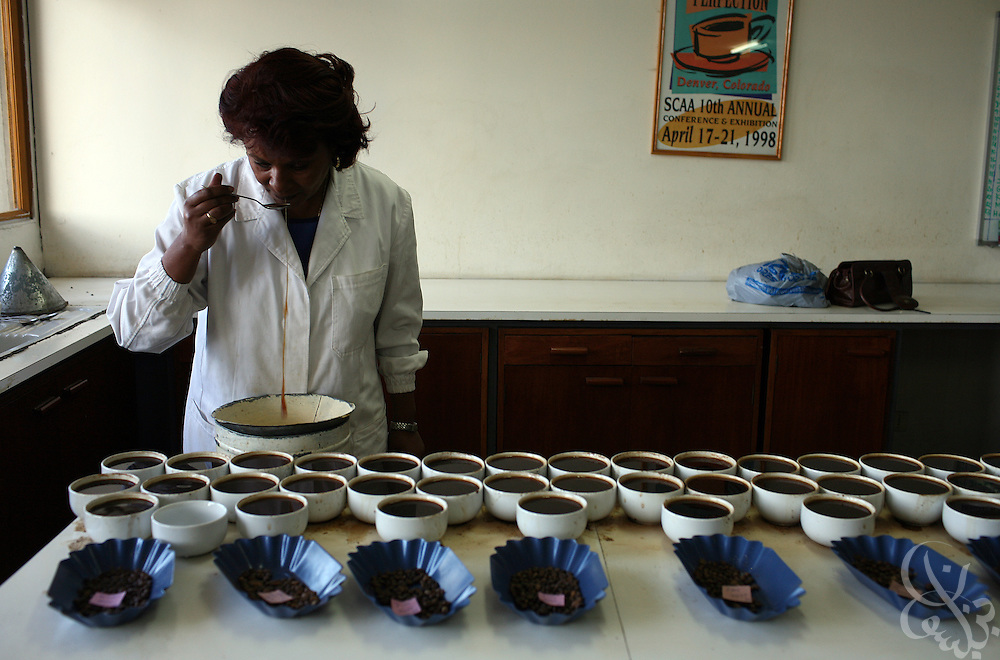 "An Ethiopian ""cupper""  samples various coffee batches in the cupping station of the giant warehouse of the Keffa Export Coffee Processing Plant February 21, 2007 in Addis Ababa, Ethiopia.  Cupper's job is to evaluate different coffees taste and unique characteristics and to guarantee quality and consistency throughout the processing stage. Ethiopian coffees from areas such as Sidamo, Hara, and Yirgacheffe are especially famous for their distinctive high quality, flavorful and aromatic coffee beans."