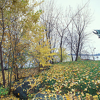 Canada, Ontario, Kenora, Husky the Musky, a 40-foot tall fiberglass fish sculpture, along Lake of the Woods on autumn morning