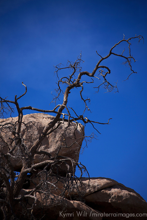 USA, California, Joshua Tree. Barker Dam Nature Trail.