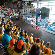 Cardinal Health RBC 2016 Camp Cardinal at Shedd Aquarium, Chicago. Photo by Alabastro Photography.