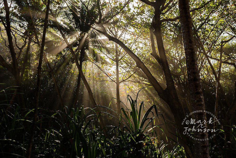 Sunbeams in a tropical forest, Kauai, Hawaii