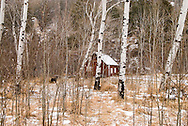 Cabin in aspen (Populus tremuloides) grove, Australian Shepherd dog,  Paradise Valley, south of Livingston Montana<br /> PROPERTY RELEASED