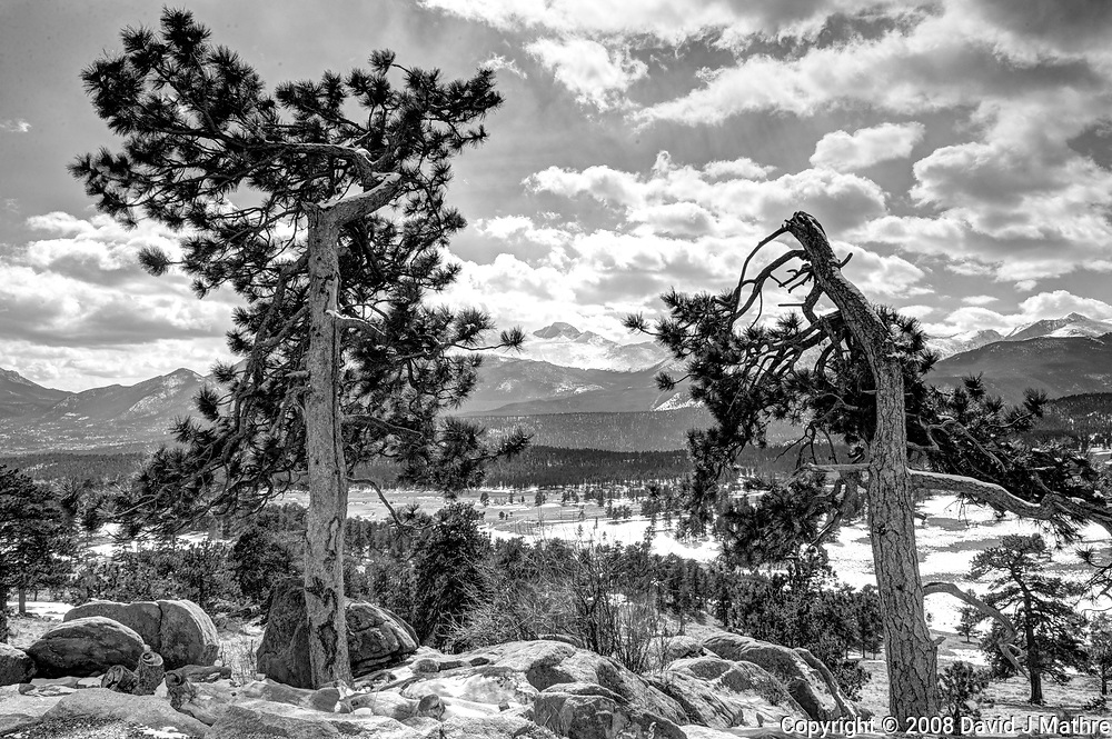 Pine trees in the winter. Rocky Mountain National Park. Composite of seven images taken with a Nikon D3 camera and 24-70 mm f/2.8 lens (ISO 200, 27 mm, f/16, various). Raw images processed with Capture One Pro, and HDR composite generated using Photomatix Pro.