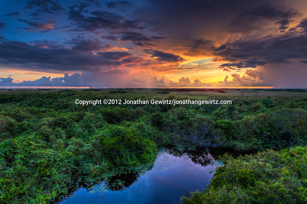 Distant showers lit by the setting sun provide a glorious backdrop to the alligator pond and surrounding vegetation near the Shark Valley observation tower in Everglades National Park, Florida. <br />