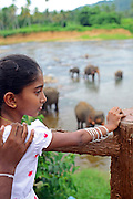 Elephants are taken to the river for a bath at Pinnawala Elephant Orphanage, Sabaragamuwa Province of Sri Lanka. <br /> <br /> For the conscious visitor, a strange and uncomfortable feeling arises during the visit, as it can be easily mistaken with a zoo or a profitable business, which makes it hardly recommendable. <br /> <br /> Some animal welfare associations, such as Born Free, and elephant experts show strong disagreement with the management and request changes in the level of care, with concerns about chaining, transfers, breeding and the encouragement of visitors by the keepers to have direct contact with the animals, mainly motivated by the exchange of tips and not always positive for the elephant&yen;s wellbeing.
