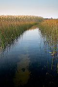 channel through reeds (vertical)