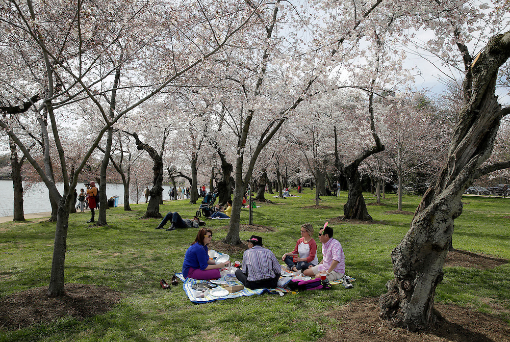 A group of people sit under blooming cherry trees along the tidal bason in Washington March 23, 2016.      REUTERS/Joshua Roberts