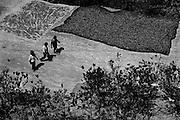 Bolivia -  San Jose - Coripata - essiccazione della foglia di coca