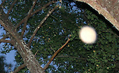 Orbs and Other Mystical Oddities