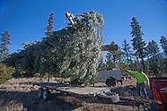 Sisters City Tree 2013