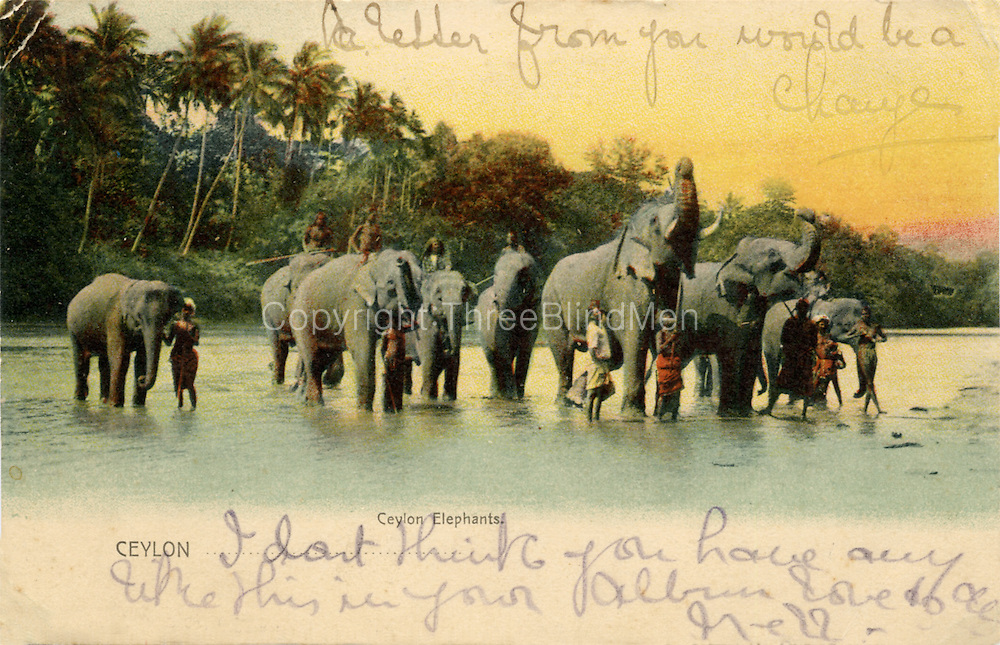 Elephants in the river.