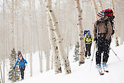 Backcountry skiers pass through an aspen grove in Uncompahgre National Forest, Colorado.