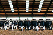 Commercial Agricultural photography, Duns, Scottish Borders for Pinstone Communications - Trident Feeds.