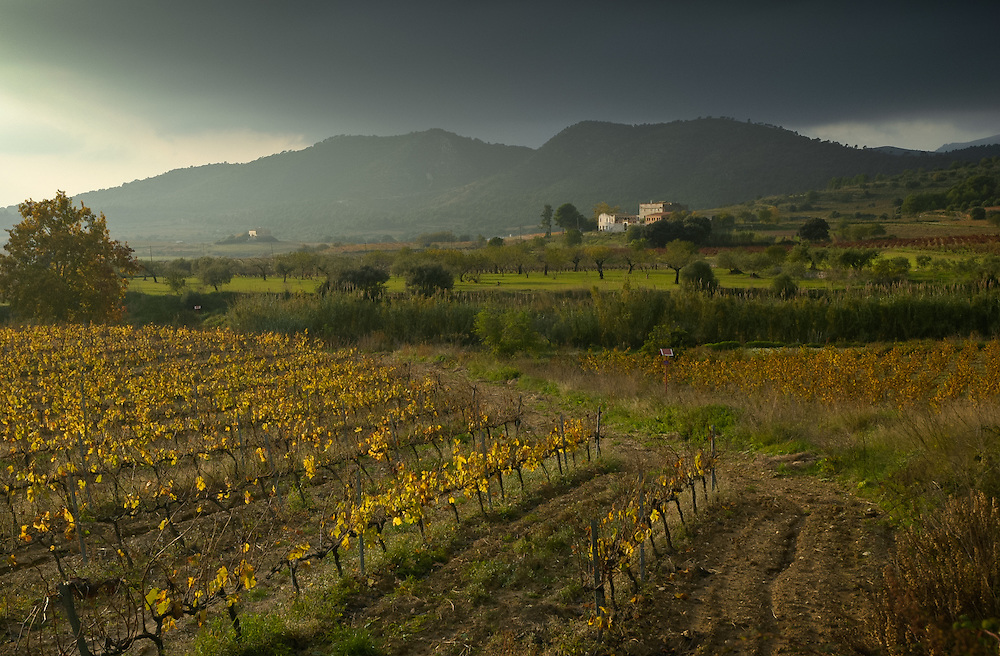 Storm clouds over autumnal vines in the Catalan Baix Penedes wine region, with orchard and farmhouses, surrounded by the Serra Llarga hills, Tarragona Province