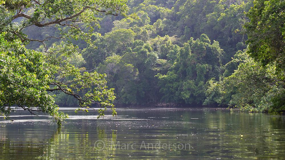 Rainforest along the Daintree River, Queensland, Australia