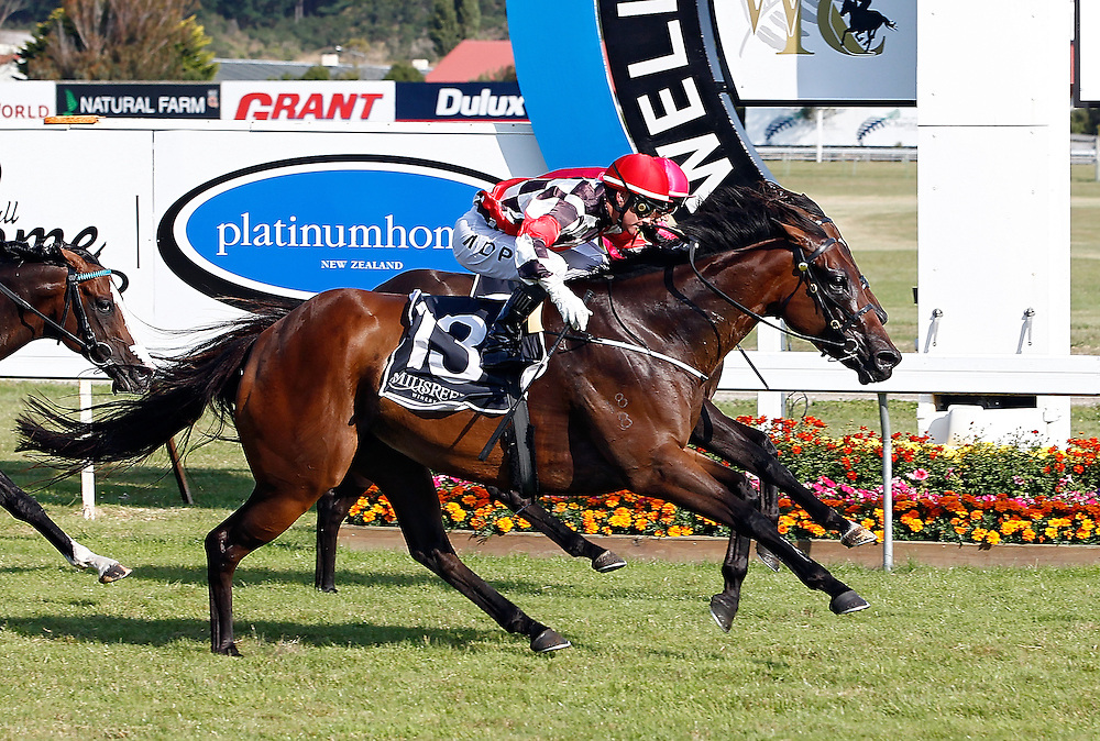 Irish Fling ridden by Mark Du Plessis, left manages to hold out Natuzzi ridden by Michael Coleman, hidden, to win the 1200m Telegraph Handicap at Trentham Racecourse, Wellington, New Zealand, Saturday, January 18, 2014. Credit: SNPA/Dean Pemberton