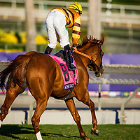 Wise Dan, ridden by Jose Lezcano wins the Breeders' Cup Mile on November 2, 2013 at Santa Anita Park in Arcadia, California during the 30th running of the Breeders' Cup.(Alex Evers/ Eclipse Sportswire)