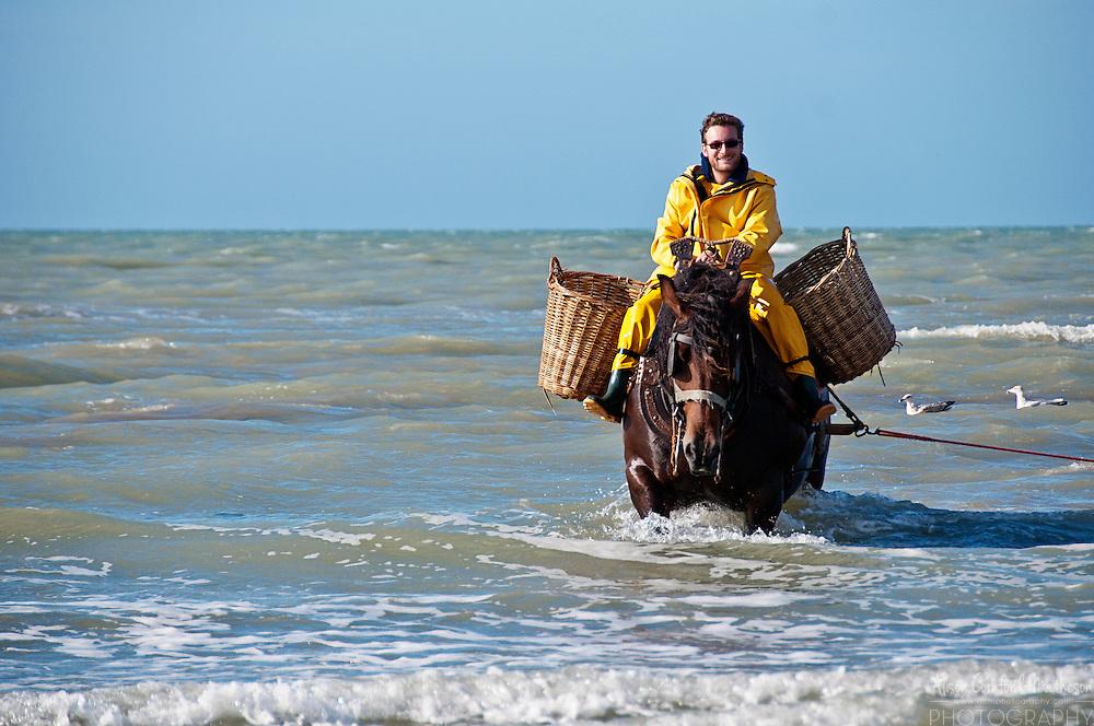 Shrimp fisherman on horseback fishing for grey shrimp in Oostduinkerke, Belgium.