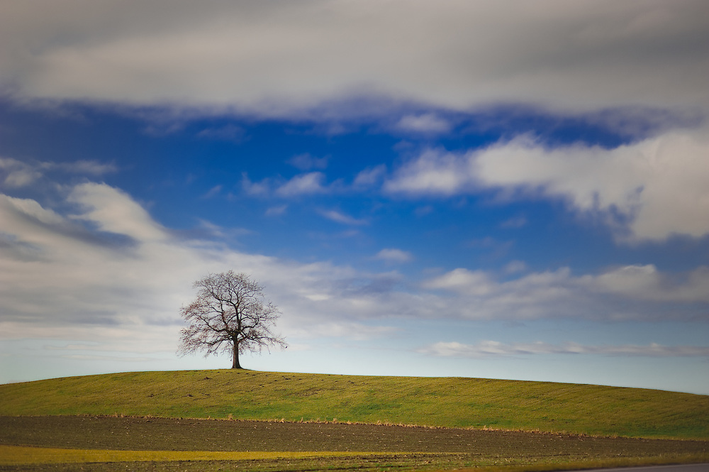 A lone tree stands on a hill in Bavaria, Germany