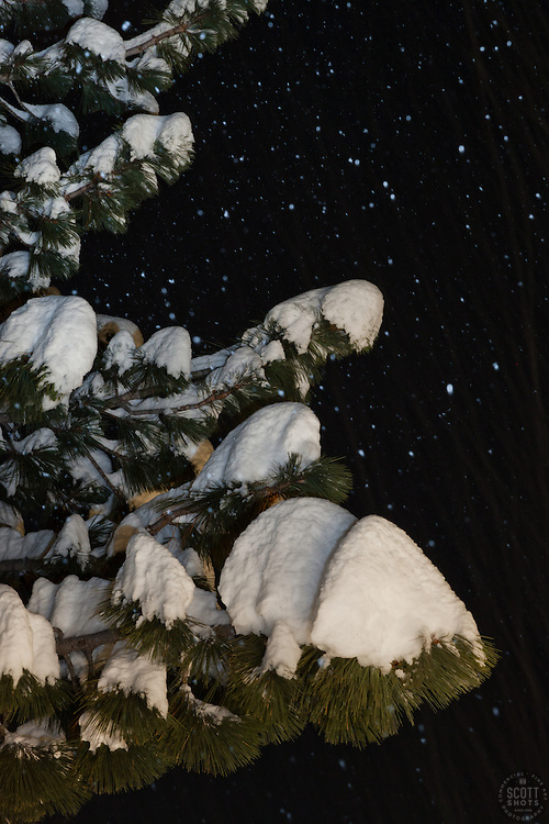 """Snowy Tree at Night"" - This snow covered tree was photographed during a snowstorm in the Tahoe Donner area of Truckee, CA."