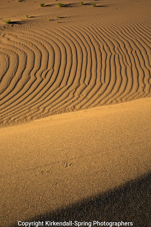 ID00669-00...IDAHO - Patterns in the sand at Bruneau Dunes State Park.