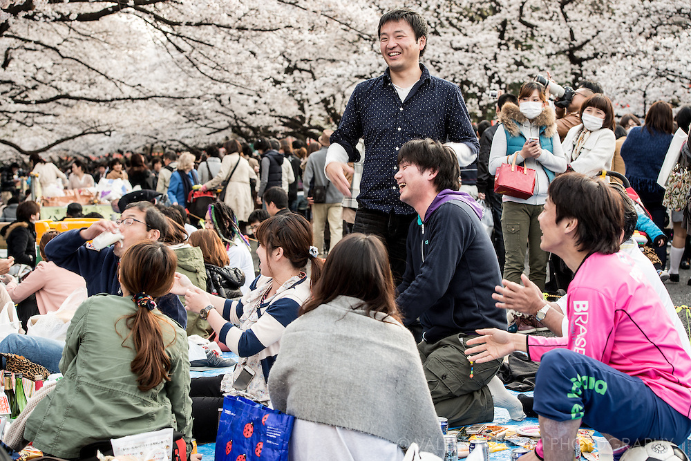 Hanami is the Japanese traditional custom of enjoying the transient beauty of cherry blossoms. In modern-day Japan, hanami mostly consists of having an outdoor party beneath the sakura during daytime or at night.