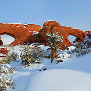 The North and South Windows of Arches National Park, Utah, are blanketed in fresh snow. The park is more than 4,000 feet above sea level, so its limited precipitation falls as snow in the winter.