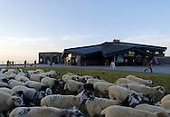 16/07/15 - SOMMET DU PUY DE DOME - PUY DE DOME - FRANCE - Montee a l estive d un troupeau de brebis Rava au Sommet du Puy de Dome - Photo Jerome CHABANNE