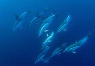Marine Mammals of New Zealand.