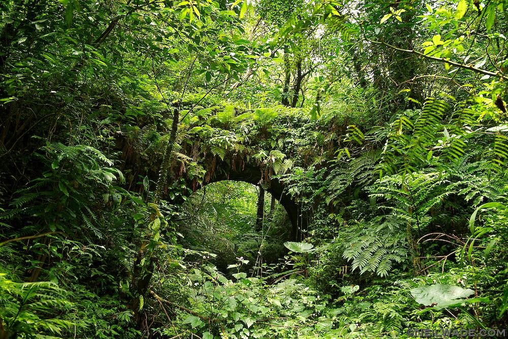 A old bridges lies crumbling as the jungle reclaims in near Pingxi, Taiwan.