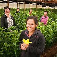 SARA QUIÑONES JUNTO ALGUNAS MUJERES PRODUCTORAS DE FLORES LILIUM, BENEFICIARIAS DEL CONVENIO INDAP PRODEMU. FLORES DE MEDELIS, FUERTE AGUAYO, CONCON, QUINTA REGION DE VALPARAISO. 25-10-2013 (©Alvaro de la Fuente/Triple.cl)