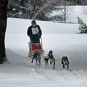 Laconia Sled Dog Race