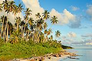 Palm trees along a beach, Maratua, Kalimantan, Indonesia.