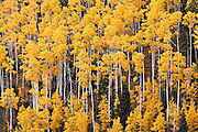 Autumn color in the Carson National Forest of northern New Mexico.