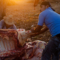 A prisoner of the Community Police (blue T-shirt) helps butchering a cow for peoples' meal, as part of his reeducation program. Reeducation means the repair of damages done by antisocial behaviors, such as theft, murder, kidnapping even witchcraft by working for the community. The reeducation also contemplates psychological support and talks with elder men. /  Un detenido por la PolicÌa Comunitaria (camisa azul) ayuda destazando una vaca para la comida, como parte de su programa de reeducaciÛn. La reeducaciÛn implica la reparaciÛn del daÒo por conductas antisociales, como robo, asesinato, secuestro e incluso brujerÌa, con trabajos para la comunidad. La reeducaciÛn tambiÈn contempla apoyo psicolÛgico y pl·ticas con ancianos. (Photo:  Prometeo Lucero)