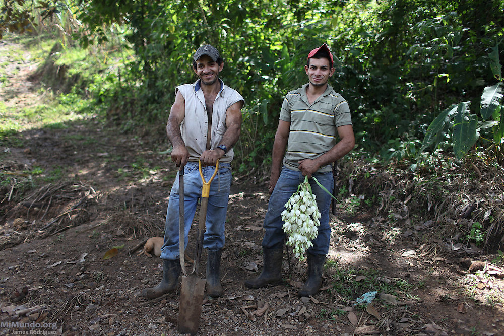 Juan Valverde Sánchez (left) and Guillermo Valverde Elizondo, father and son, respectively, are both ASOPRODULCE cooperative members. Guillermo holds a bunch of yucca flowers. Knows as the Flor de Itabo in Costa Rica, it is a local delicacy found in the wild sometimes collected by sugar cane cutters. ASOPRODULCE, Jaris de Mora, San José, Costa Rica. August 25, 2012.