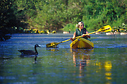 Image of a woman kayaking at Mercer Slough Nature Park in Bellevue, Washington, Pacific Northwest, model released