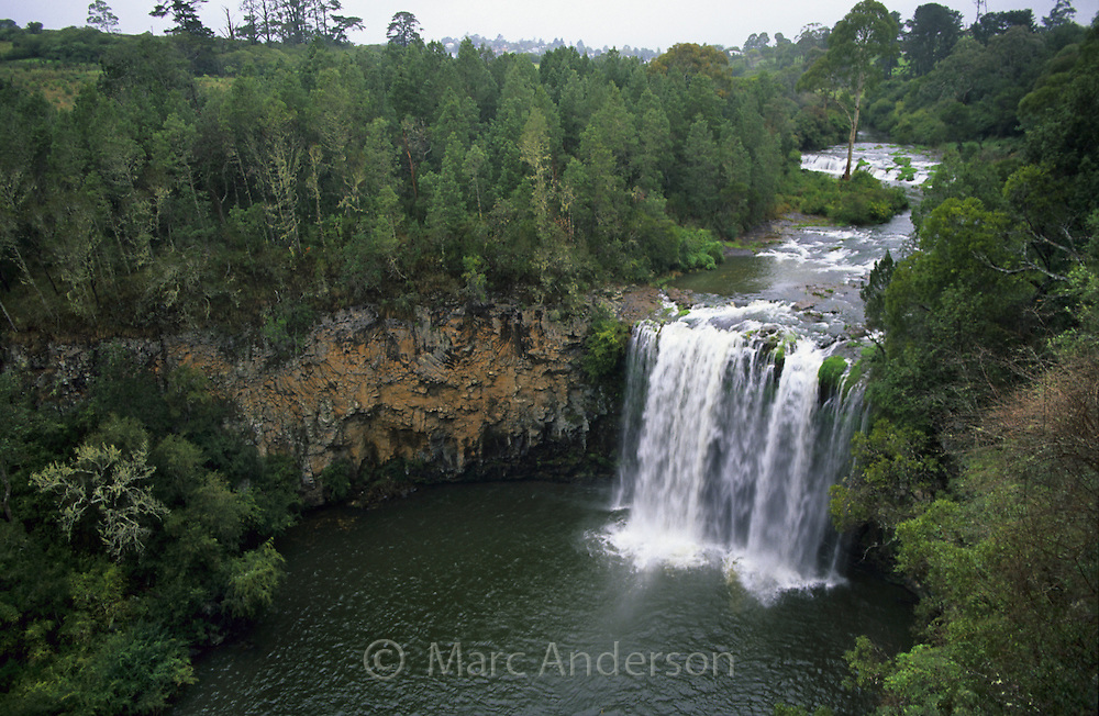 Dangar Falls, Dorrigo National Park, NSW, Australia.