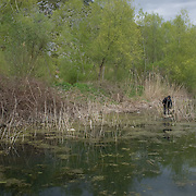 Man fishing in the small Prespa near the village of Tren, Albania