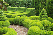 A close-up view of the topiary  in the courtyard parterre at Bourton House, Gloucestershire.<br />