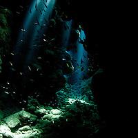 Caribbean Reef Scenes