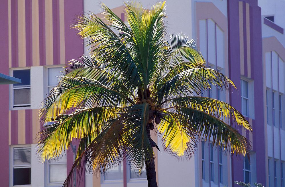 Palm Tree and Art Deco Building, Collins Avenue, Miami Beach, Florida, USA