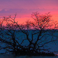 Sunset in the Gulf of Mexico behind a solitary mangrove tree in shallow water off Florida's Gullivan Key.