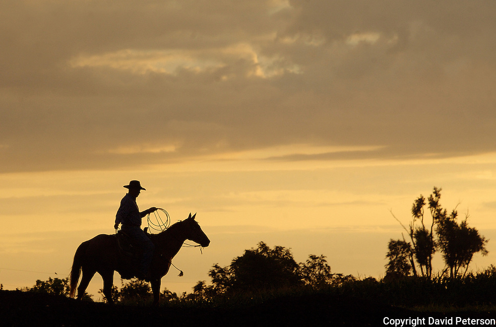 Against the backdrop of a rising sun, cowboy Brian Long watches for stray calves during a bi-annual roundup at the Bar B ranch near Albia, Iowa.   Calves were roped and seperated from the herd for vaccinations, branding and the placement of growth stimulant implants.  The male cows were also castrated.  Owner Catherine Bay runs the operation with a herd of over 2,000 cattle.